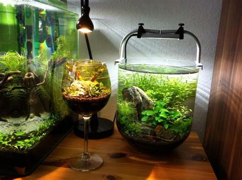 aquascape   wine glass creative tank idea amazing