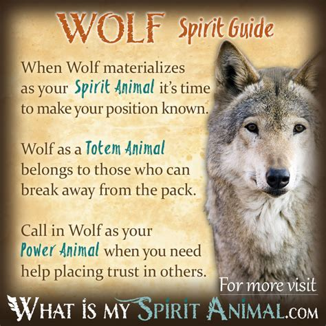 spirit animal wolf spirit meaning search engine at search