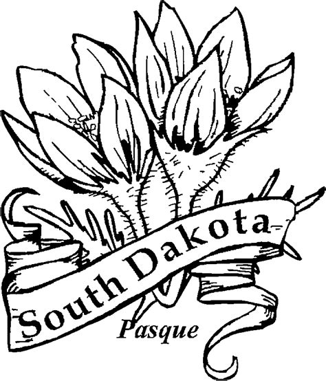free coloring pages of new mexico state flower