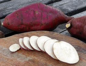 red japanese sweet potato  slips southern exposure seed