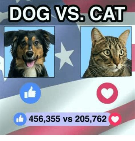 Dog And Cat Memes - 25 best memes about dogs vs cats dogs vs cats memes