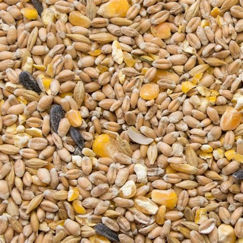 alimenti bio aliment bio pour volailles poules d ornement