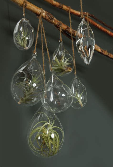 Air Plant Chandelier How To Decorate With Hanging Glass Terrariums Hooks Lattice