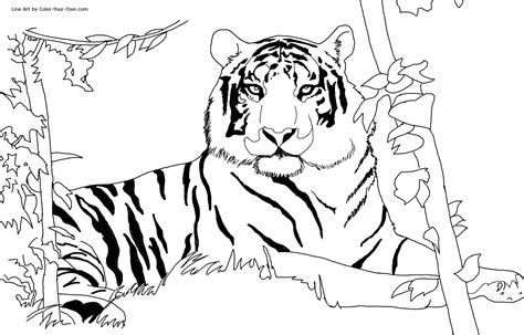 free printable tiger coloring pages for kids