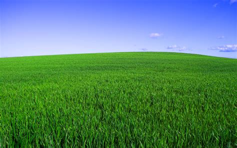 hitman grass field green sky horizon landscapes 1456464