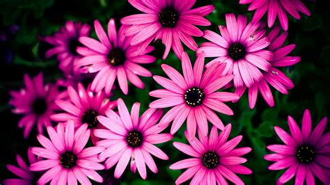 green wallpaper with pink flowers pink flowers on green background wallpapers and images