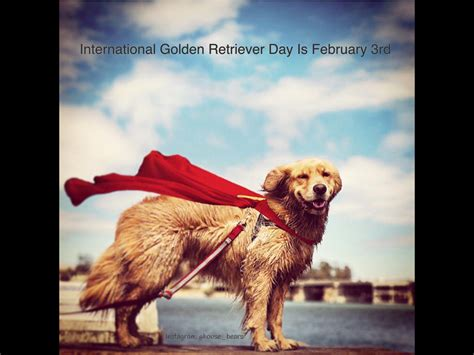 golden retriever day a brief history of international golden retriever day the daily golden