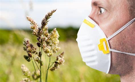 allergia graminacee alimenti da evitare allergia alle graminacee e reazioni crociate gli alimenti