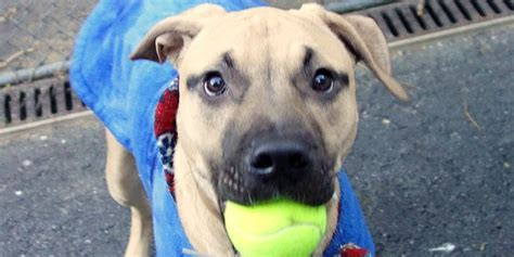 adopt a nyc adopt a pet in new york city featured animals for 1 13 2014 courtesy of nyc s animal