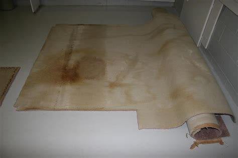 urine on rug doodoo voodoo pet urine odor neutralizer cat subfloor carpet pad