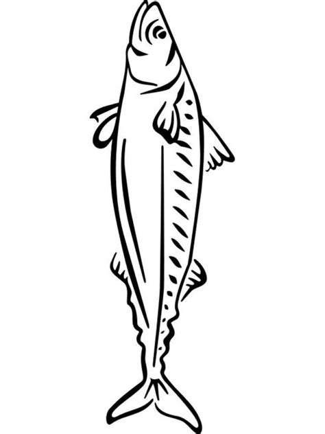 herring fish coloring page mackerel coloring pages download and print mackerel