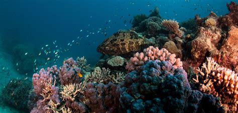 dive great barrier reef resort scuba dive australia liveaboard