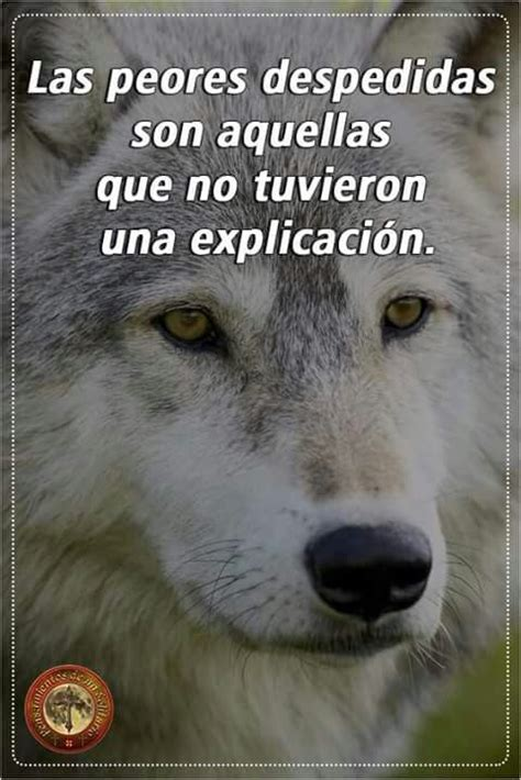 imagenes de lobos tristes pin de jorge rojas en wolf pinterest frases lobos y citas