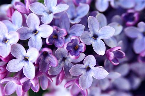 Vegan Home Decor by Lilac Flowers Top Easy Backyard Garden Decor Design