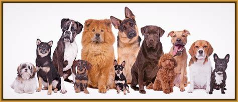 perros todas clases fotos todas las razas de perros que existen archivos