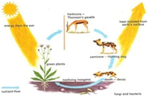pattern of energy and matter flow flow of matter in ecosystems ck 12 foundation