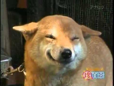 imagenes animales riendose perro se rie al ver al due 241 o youtube