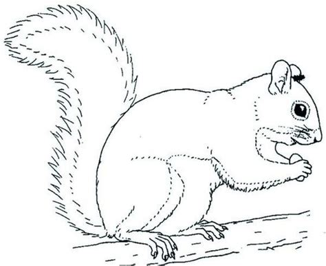 get this online squirrel coloring pages for kids sz5em