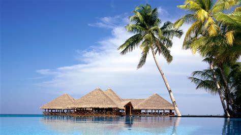 aventura marketing council  palm tree society