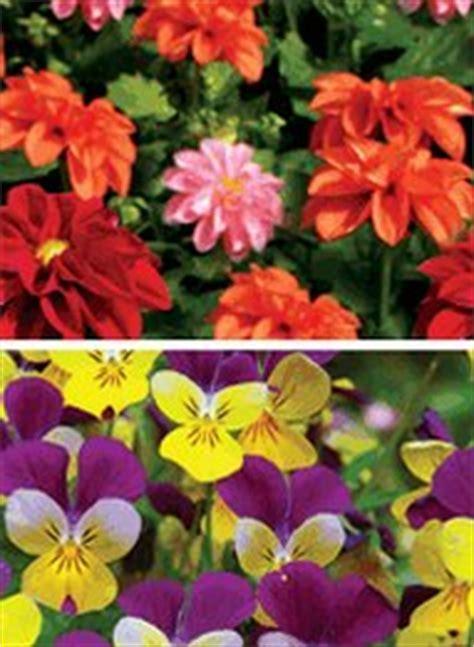 Pre Seeded Flower Mats by Pre Seeded Flower Mats Carolwrightgifts