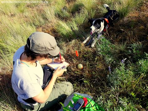 dogs saving lives shelter dogs are saving lives as conservationists