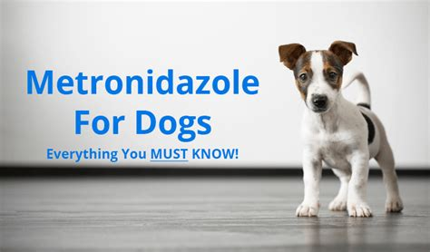 flagyl for dogs metronidazole for dogs everything you must