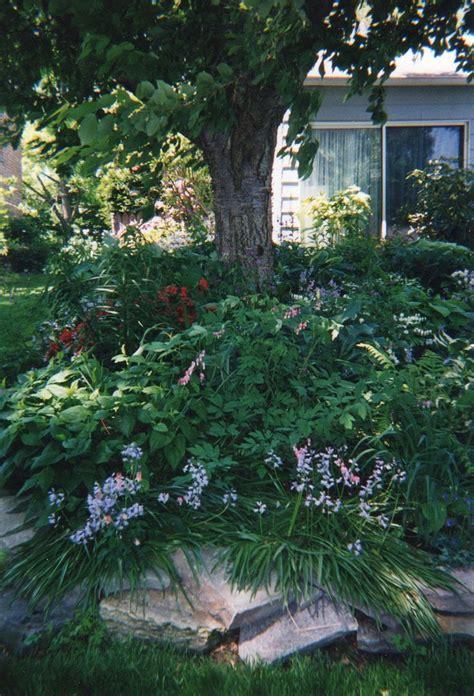 backyard trees for shade front yard shade garden my former garden pinterest