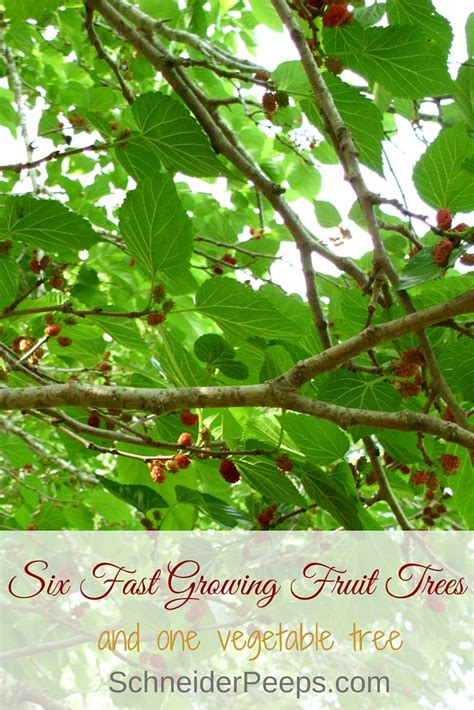 fruit fast six fast growing fruit trees and one vegetable