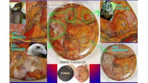 Pancawarna Mata Elang by Aktualitaindonesia S