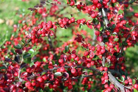 pengertian tanaman hias manfaat  contohnya