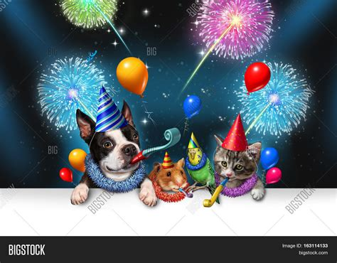 new year animal birthday new year pet celebration image photo bigstock