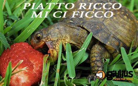 tartarughe da terra alimentazione l alimentazione delle tartarughe da terra giulius
