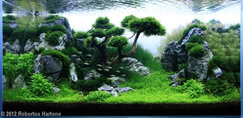 Aquascape Tree by 2012 Aga Aquascaping Contest 154