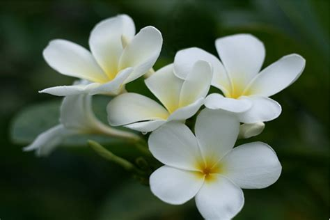 white flower images white flowers names and images 12 free hd wallpaper