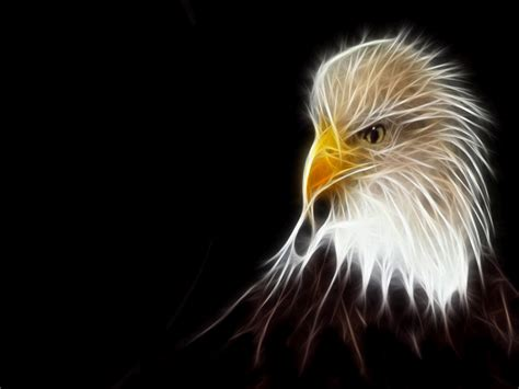 Abstract Eagle Wallpaper | eagle abstract wallpaper top dekstop top desktop no 1