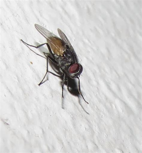 How Do Flies Get In The House Winter House Plan 2017