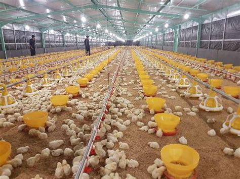 Kandang Ayam Pokphand unhas terima hibah kandang ayam closed house system