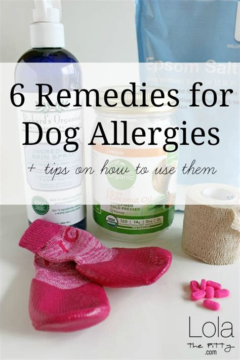 allergy remedies 6 remedies for allergies lola the pitty