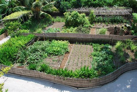 Backyard Permaculture Design by Permaculture Maldives More Television Exposure For