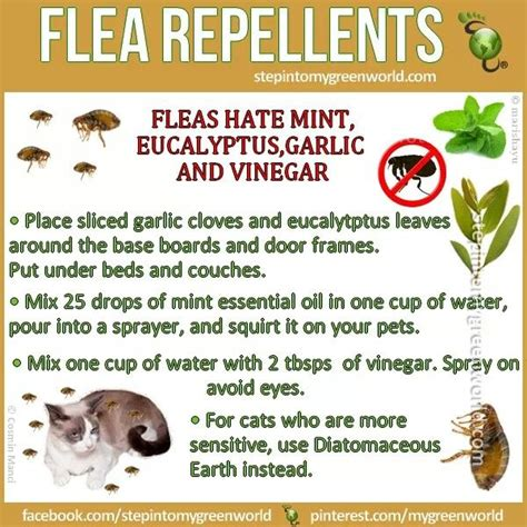 17 best ideas about home remedies fleas on