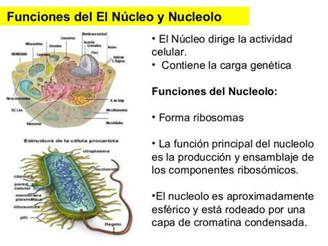 pics photos imagen tomada funciones nucleo ecro teor 237 a celular