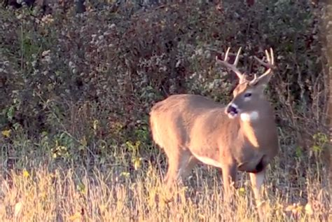 le culle pi禮 grow em big tips on managing bucks on your property