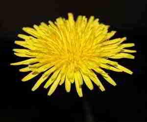 sognare fiori gialli fiori gialli nei sogni gpsreviewspot