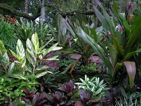 tropical plant species easy tropical houseplants hgtv