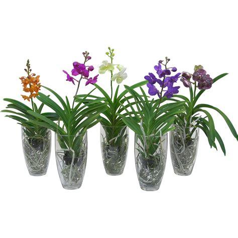 feuerkorb baumax orchideen kaufen bei obi obi ch