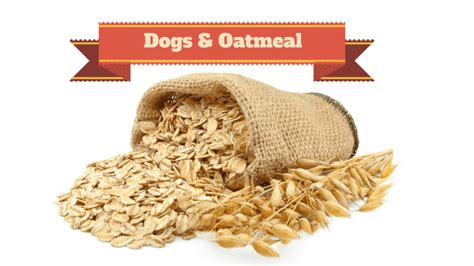 can dogs eat oatmeal can dogs eat oatmeal is it for dogs smart owners