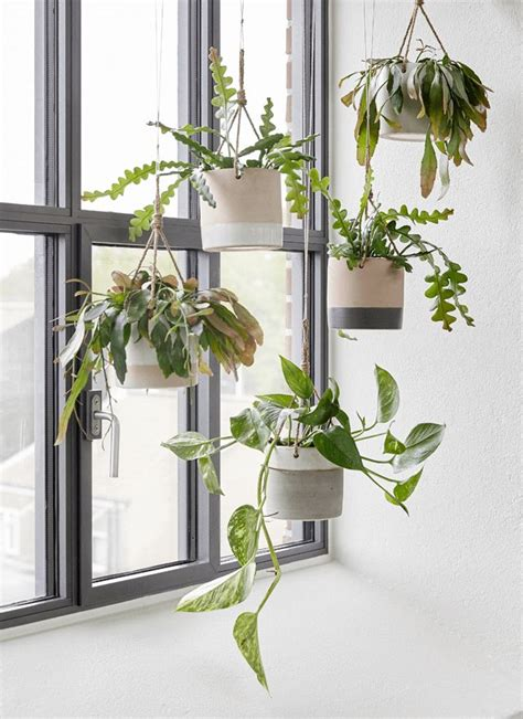 decorative indoor hanging baskets terrarium design outstanding decorative hanging baskets