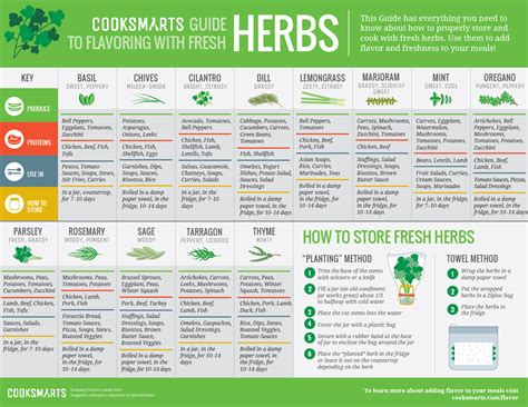 herb growing chart keep it fresh with herbs fresh herbs infographic and herbs