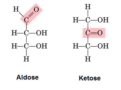 d aldoses carbohydrates ketose biochembloggang