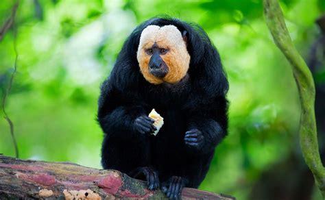 imagenes de animales raros y deformes los animales m 225 s raros del mundo